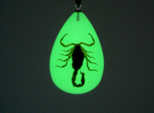 Luminous  Real Scorpion Key Chain - New Luminous Product Real Crab and Scorpion Keychain bag Car key Ring #1-17067