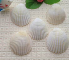 Crafts Natural sea shells 3-5cm white color 72pcs/lot for home decoration wall autical wedding decoration art free shipping(China)