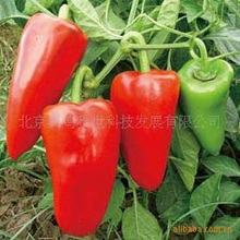 2017 Direct Selling Sale Annual Summer Excluded Mini Garden Outdoor Plants Mini Interest Seeds Sweet Pepper 200 Seeds Vegetable(China)