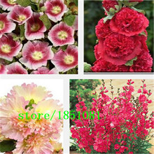 Sales promotion! hollyhock seeds, cheap flower seeds mixed color 100/lot Free shipping(China)