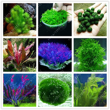 100 pcs/bag aquarium plants seeds Mini Dwarf Pearl Plants Aquarium Grass Seed Fish Tank Ornamental Aquatic water grass plant pot