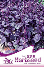 Dark Opal Basil Purple Basilicum Herb Organic Seeds, Original Pack, 50 Seeds / Pack, Heirloom Red Thai Basil Herbs D047