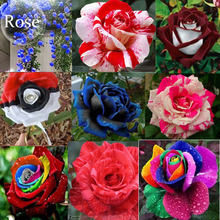 Mixed 9 Types of Rare Rose Perennial Flowers, 50 seeds, Pink Black Red Purple chocolate coffee Blue Rainbow climbing E3806(China)