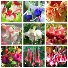 100 PCS / bag Unique Red Fuchsia Perennial Flower Seeds Potted Flowers DIY Planting Flowers Bell Flower Seeds Multicolor