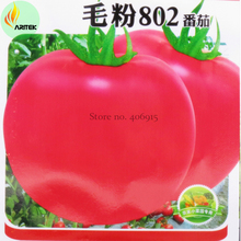 Rare Heirloom 'Mao Fen 802' Pink Big Tomato Organic Seeds, 300 Seeds, Original Pack, tasty edible indeterminated fruit OJK017Y