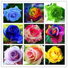 20 kinds mixed 100 rose seeds/pack ,Four Seasons sowing the seeds of perennial flowers, rose flowers seeds easy to plant