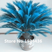 Hot Sale!!! Rare Blue Cycas seeds, Sago Palm Tree, bonsai flower, the budding rate 98% potted plant for home garden, 10pcs/ bag(China)