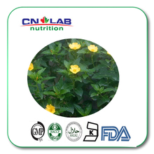 200g/lot hot selling damiana extract(China)