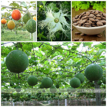 Courtyard interesting products Climbing Landscape Plant melon seeds 10pcs