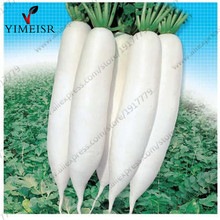 Chinese radish seeds grown on the family farm white radish organic vegetables seed for Home garden plants 100seeds/bag(China)