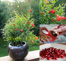50/bag pomegranate seeds mini bonsai pomegranate seeds  Japanese Dwarf fruit for home garden planting