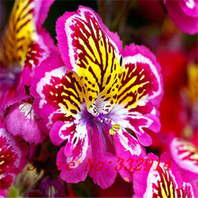 ``hot `40seeds Diffenent Mixed Butterfly Orchid Bonsai Flowers Orchid Seed Pot Flower Plant Garden Diy Home(China)