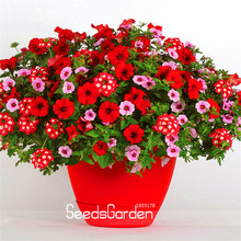 New Fresh Seeds Park Glamorous Girl Mixed Garden Petunia Seeds,100 Pcs/Pack,Lipstick Candy Hearts and Feminine Beauty,#V26C8Q