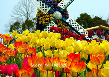 AAA 2016 Bonsai tulip Seeds 500 pcs 10kinds mix Flower Seeds Novel Plant for Garden Free Shipping