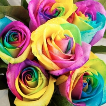 200PCS Colorful Rainbow Rose Seeds Home Garden Plants Multi-color Flower Seeds