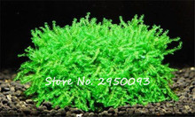 Pearl Moss Seeds Sagina Subulata Seeds, Moss Bonsai Decorative Water Grass Mini Leaf Live Plant Fish Tank Decoration 1000 Pcs
