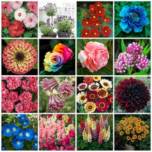2900Pcs Flower Seeds 16 Varieties Packed Seperate Easy to Grow DIY Pretty Garden Flowers Save a lot(China)