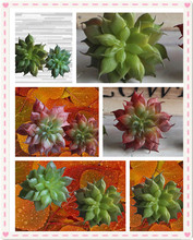 Artificial Succulent Lotus Plants Grass Artificial Plant Landscape Fake Flower Arrangement Garden Decor Home Office Decoration