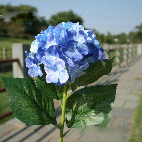 фото цветок синий
