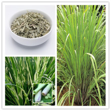 500pcs / bag EAST INDIA C. Flexuosus Lemon Grass Seeds Herb Lemongrass Seeds Flower Seeds Used fresh or dried lemon tea