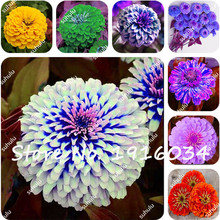 Big Promotion! 100Pcs/Bag Zinnia Seeds ,24 Colors to Choose, Perennial Flowering Plants Potted Charming Chinese Flowers Seeds