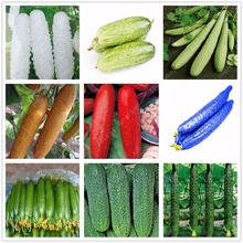 2017 Hot Sale 100 pcs Cucumber Seeds, 9 Varieties Green Fruits Vegetables New Year NO-GMO Cucumber For Home Garden