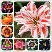 New Sale! 100 Pieces/Lot Hybrid Daylily Flowers Seeds Hemerocallis Lily Indoor Bonsai Home Garden Supplies Christmas Decorations
