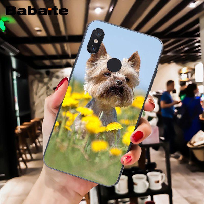 Westie Terrier Dog Puppy Highland Terrier