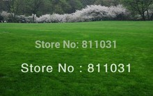 Lawn Seed 50 Grams Grass Seeds Fresh Green Soft Runner Natural Plant DIY Home Garden(China)