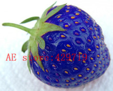 1000 PCS rare blue  Strawberry Seeds fruit and vegetable  strawberry seeds for garden grow fast  nature gift NO-GMO