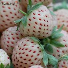 Natural Sweet White Strawberry Seeds Nutritious Delicious Plant Seed  50 Particles / lot