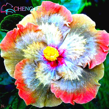 50 Particle/bag Giant Hibiscus Flower Seeds Garden & Home Perennial Potted Plants Flower happy farm Hibiscus Bonsai Grass Seed
