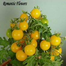 100 Particles/Bag Yellow Pearl Tomato Seeds, Yellow Cherry Tomatoes, Vegetable Fruit Seeds