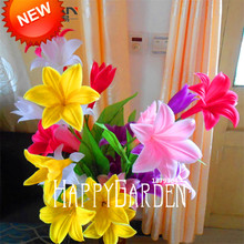 Hot Sale!Color lily seeds cheap perfume lily seeds, mixing different varieties - 100 pcs/Pack,#GQQZBS
