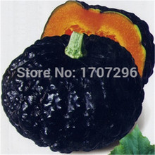 Japan pumpkin seeds, fruit and vegetable seeds DIY home garden decor and delicious sweet plantiing - 10 pcs / lot