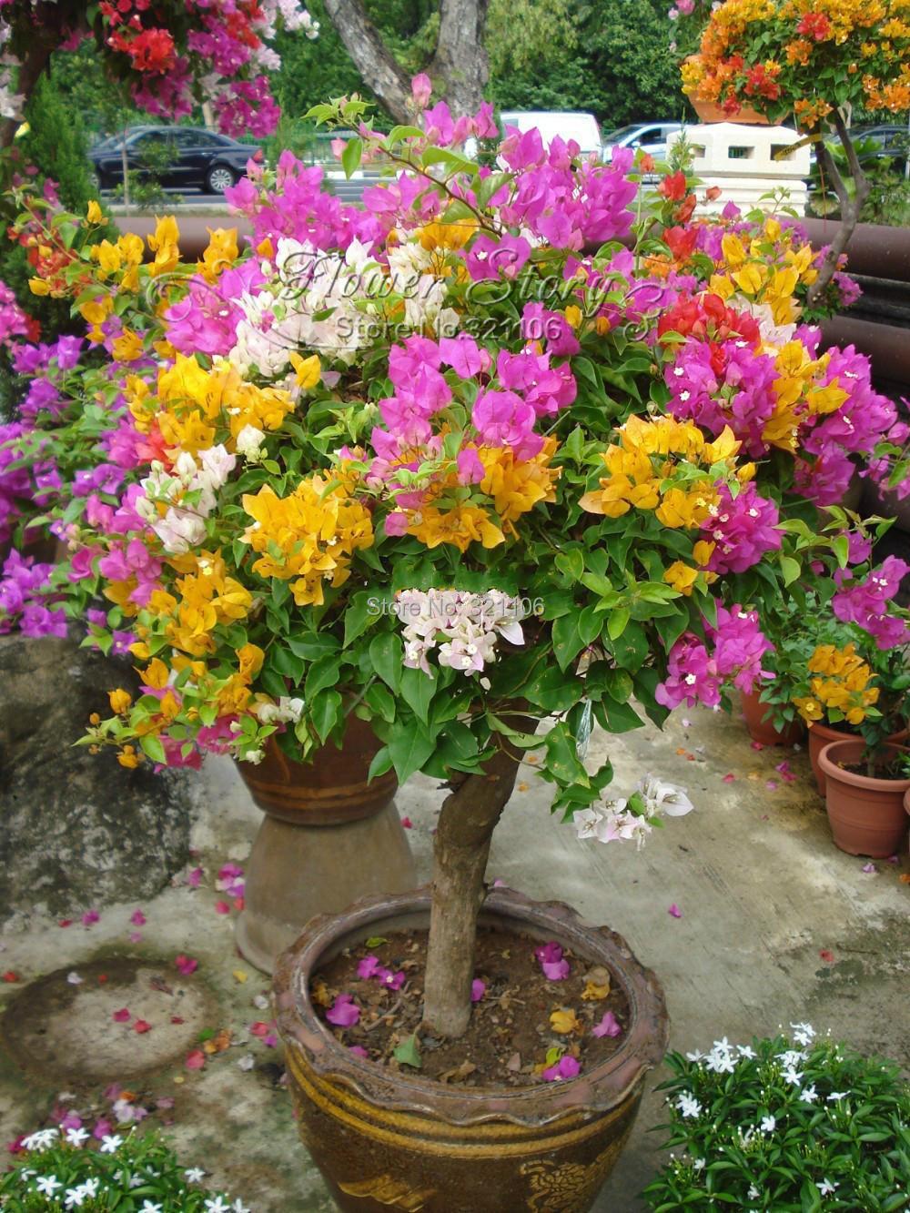 букеты цветов на юбилей из хризантем фото