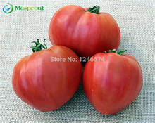 "50SEEDS - 100% Genuine Fresh Rare "" KOSOVO HUGE MEATY PINK BEEF HEART "" Tomato Seeds fruit vegetable seeds * Free Shipping"