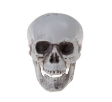 Mini Plastic Skull Decor Prop Skeleton Head Halloween Coffee Bars Ornament(China)