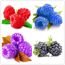 500pcs Rare Raspberry Organic Fruit(Rubus Corchorifolius)Seeds Green Red Blue Purple Black Raspberry Seeds For Home Garden Plant(China)