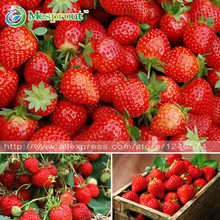500PCS strawberry seeds, perennial Four Seasons planting seeds Fragaria ,DIY Home and Garden, fruits seeds, vegetable seeds