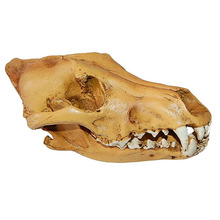 Resin Wolf Skull Replica Head Model Figurine Collection Home Bar Decor