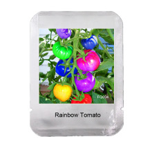 100 Seeds / Pack very rare rainbow tomato seeds, fruit and vegetable seeds, organic potted plants for home garden NON-GMO,#FQ004(China)