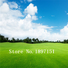 Big sale Lawn Seed 500pcs Grass Seeds Fresh Green Soft Runner Natural Plant Free shipping