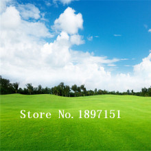GGG Big sale Lawn Seed 500pcs Grass Seeds Fresh Green Soft Runner Natural Plant Free shipping(China)