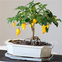 Hot Chile Pepper 100 Seeds-Chili Organic Vegetable Seeds Ornamental Capsicum Annuum Garden Balcony Vegetables Bonsai Potted(China)