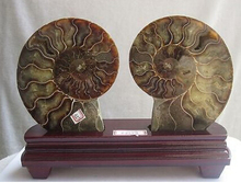 002077 NATURAL CUT CRETACEOUS AMMONITE FOSSIL Sliced MINERAL SPECIMEN(China)