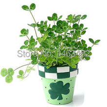 Clover seeds genuine seed plant bonsai garden grass seeds * 100pcs Free shipping
