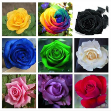 A Variety Of Rose Seeds / Red / Orange / Blue / Green / Black / Purple / Gray / Yellow Rose Bonsai Flowers 100 / Bag(China)