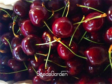 Loss Promotion!Direct US Cherries cherry tree seed seed dwarf cherry tree fruit seed South sementes da fruta,5 Pcs/Bag,#Z5P7S2