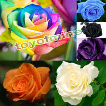 100  Pcs Multi-color Rare Rainbow Rose Flower Seeds Your Lover Garden Plants